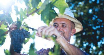 Sommelier: Das Geheimnis erstklassiger Weine