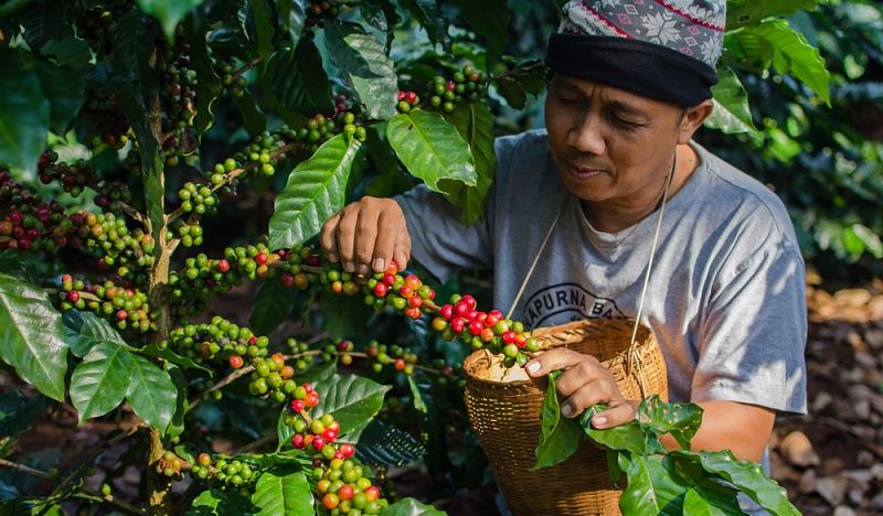 Was beim Pflücken in den tropischen Herkunftsländern beginnt, endet als edle Kaffeebohne, die in alle Welt exportiert wird. (#1)