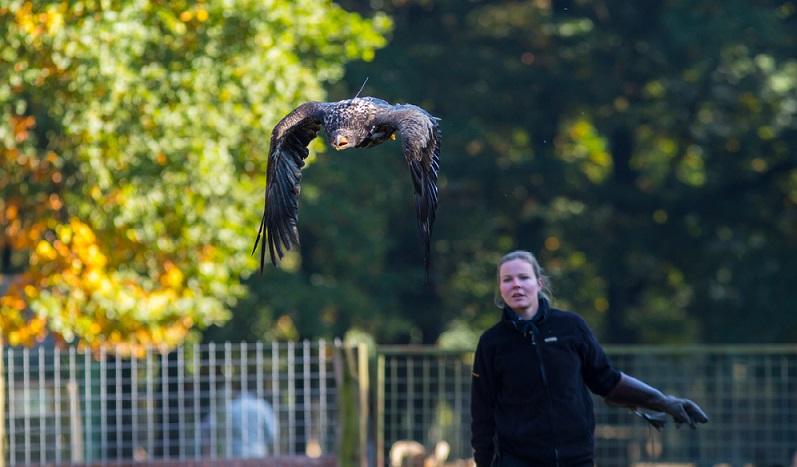 Wer hier etwas Sensationelles erleben möchte, der sollte am besten einmal zum Himmel schauen. Denn von oben kommen der majestätische Adler und Geier im Sturzflug angeflogen.